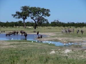 Chobe Nationalpark - Highlights Botswana Reisen