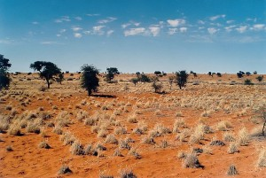 Kalahari Wüste - Highlights Botswana Reisen