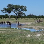 Chobe Nationalpark - Highlights Botswana Reisen